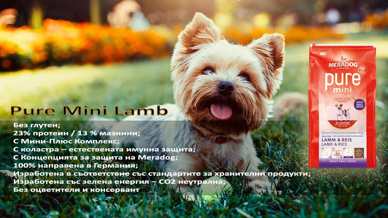 Pure mini lamb